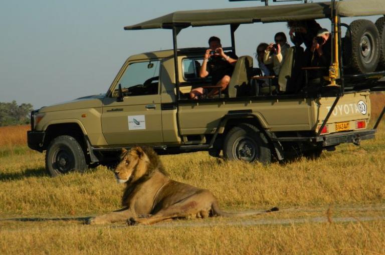 Reisende im offenen 4x4 Landcruiser bei der Beobachtung eines Löwen