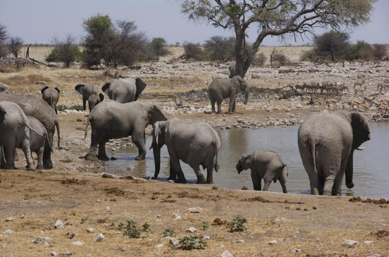 Afrika Individualreisen mit Afrika Tours Individuell