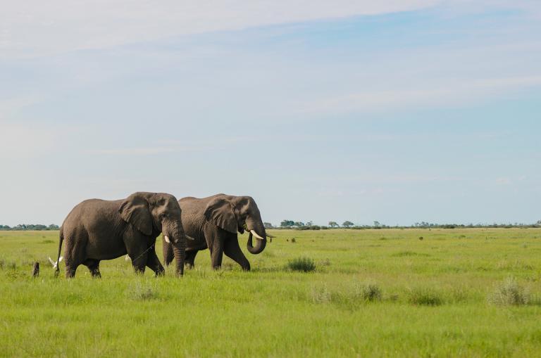Lodge Safari durch die Wildnis Botswanas