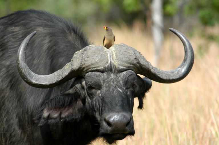 Lodge Safari Südafrika und Simbabwe