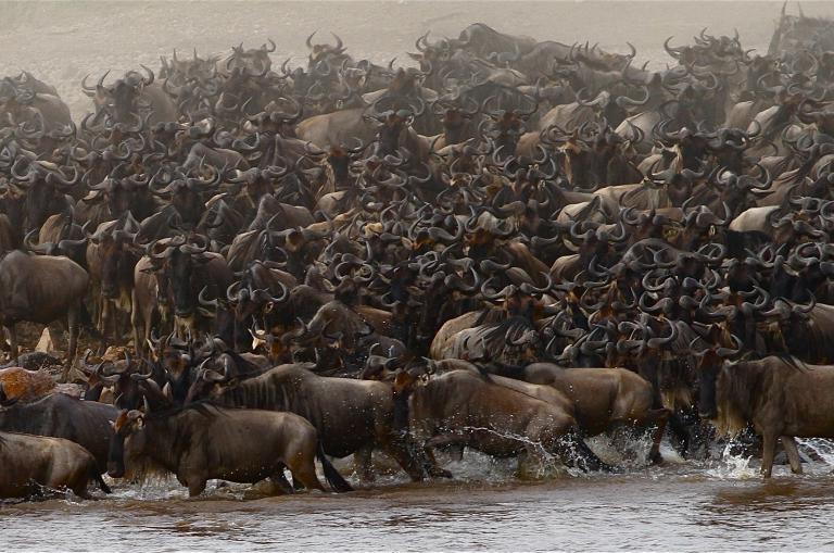 Migration in der Serengetis - Ostafrika Highlights Reise