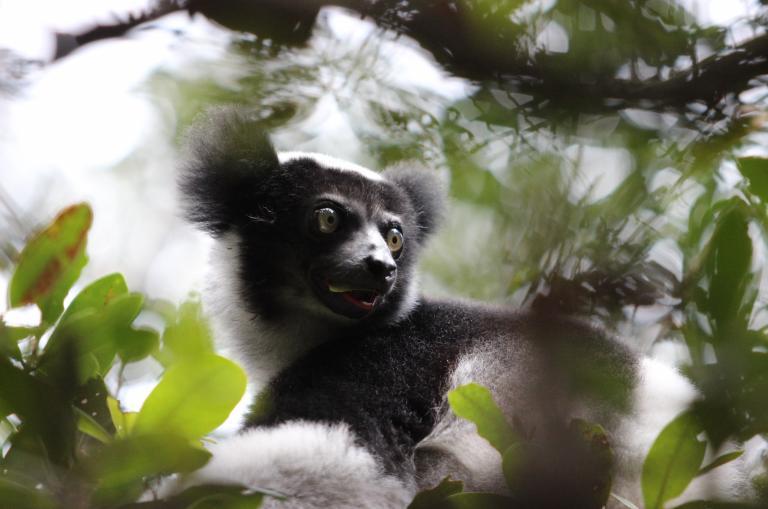 Lemur auf Madagaska