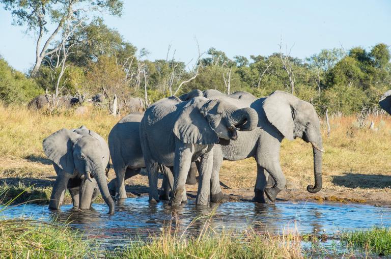 Namibia & Botswana Rundreise Elefanten am Wasserloch