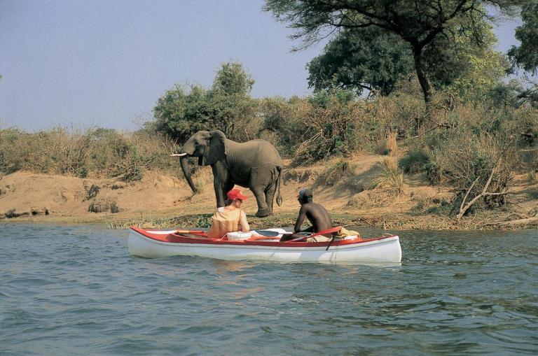 Simbabwe Reisen, Safaris & Rundreisen: Elefanten während einer Bootsfahrt auf dem Sambesi während einer Simbawe Reise aus nächster Nähe erleben
