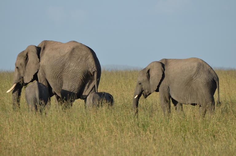 Tansania Safaris & Reisen: Erleben Sie die Elefenten in der Serengeti während Ihrer Tansania Reise