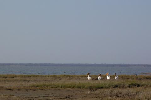 Nata Bird Sanctuary