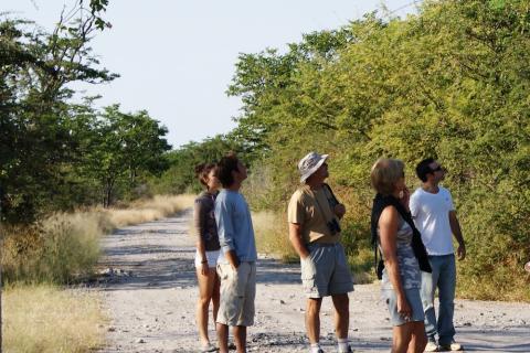 Safari in Maun