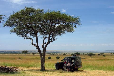 Auf dem Weg zum Victoria See: Halt in der afrikanischen Steppe unter einem prachtvollen Baum
