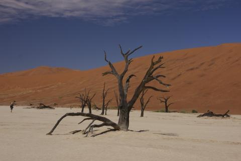 Namibwüste mit vertrocknetem Baum die gleich hinter der Stadtgrenze Swakopmunds in Namibia beginnt