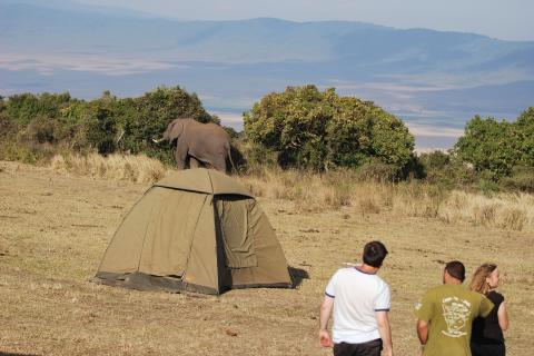 Camping Safari im Ngorongor Krater - Elefant im Camp