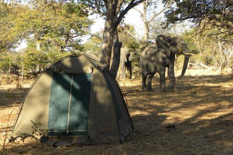 Campingplatz mit Elefant im Moremig Game Reserve