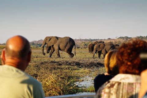 Walking Safari im Chobe Nationalpark während der Rundreise durch das südliche Afrika: Elefantenherde am Wasserlach