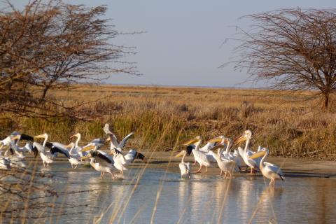 Wasserloch mit Vögeln im Nata Bird Sanctuary