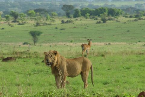 Tierbeobachtungen Murchison Falls