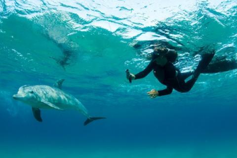 Delphine in Ponta do Oro Mosambik