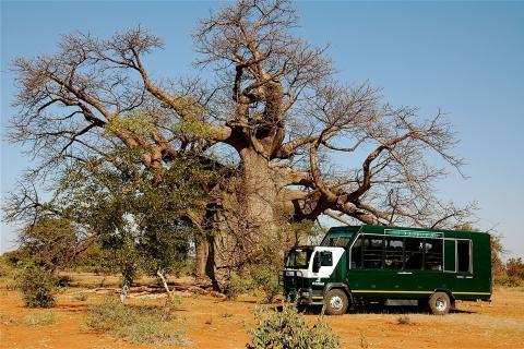 Drifters Safari Truck unter einem großen Baum in Simbabwe