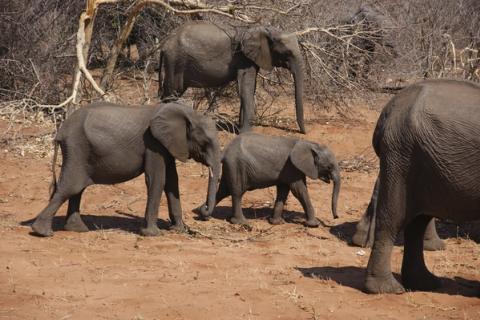 Elefanten mit Babyelefant im Chobe Nationalpark Botswana
