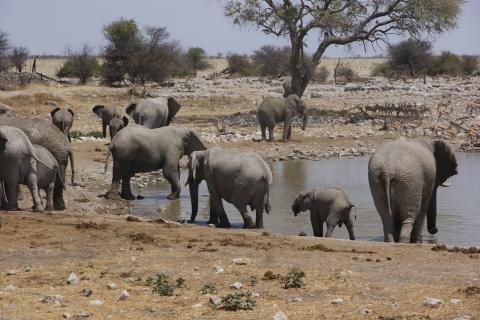 Elefanten am Wasserloch im namibianischen Etosha Nationalpark