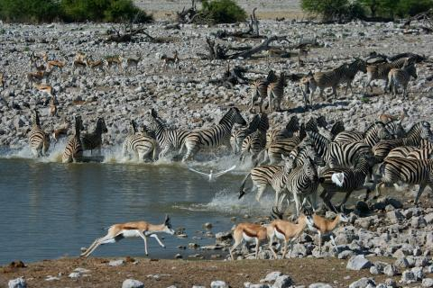 Tier am Wasserloch im Etosha Nationalpark
