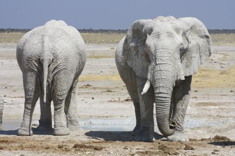 Auf Rundreise in Namibia: Elefantenherde im trockenen Etosha Nationalpark