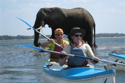 Kanu Safari auf dem Zambezi River: Reisende im Kanu, im Hintergrund ein Elefant beim Baden und trinken