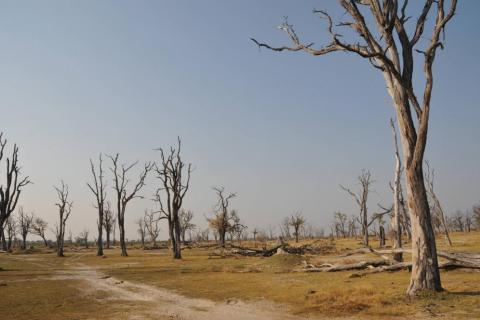 Landschafts Panorama Savuti Kanala in Botswana