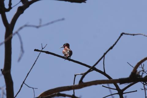 Vogel  in den Makgadikgadi Pfannen