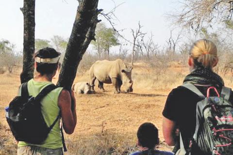 Walking Safari im Matbo Nationalpark: Auf der Suche nach Rhions