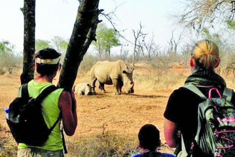 Nashorn mit Baby Noshorn während einer Walking Safari im Matobo Nationalpark in Simbabwe