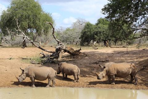 Nashorn im Mkuzi Game Reserve Südafrika
