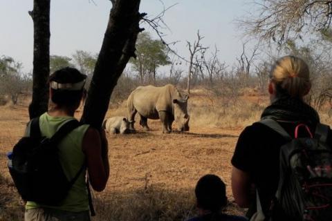 Walking Safari im Hwange Nationalpark Simbabwe: Nashorn mit Baby Nashorn