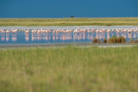 Nata Bird Sanctuary: Wasservögelin der Makgadikgadi Pfanne