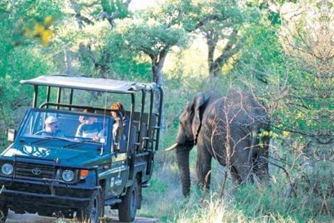 Pirschfahrt im privaten Balule Game Reserve - Fahrt im offenen Safari Jeep und Elefant am Wegesrand