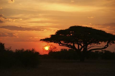 Sonnenuntergang über dem afrikanischen Busch und dem Limpopo Fluss