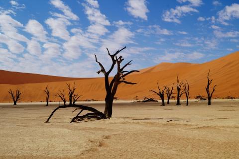 Dead Vlei im Sossusvlei Namibia: Abgestorbene Bäume in der bizarren Wüstenlandschaft der Namib Wüste