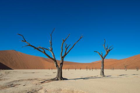 Namibia Erlebnisreise: Abgestorbene Bäume im Sossusvlei in der Namib Wüste