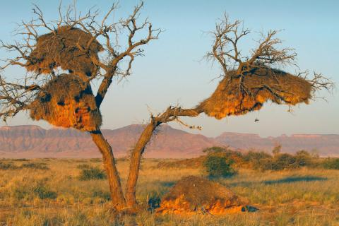 Sesriem Namib Wüste in Namibia
