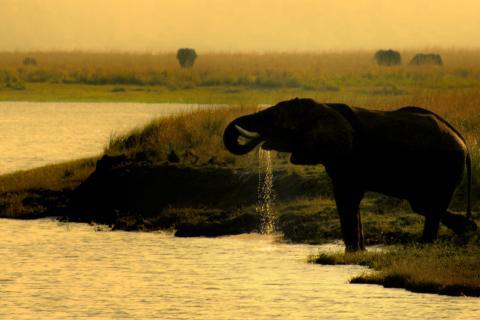 Elefanten am Flussufer während einer Bootsfahrt im Sonnenuntergang auf dem Chobe Fluss