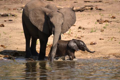 Elefanten am Wasserloch auf Safari im Etosha Nationalpark