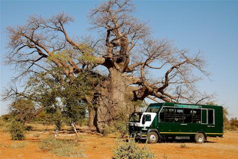 Drifter Safari Truck in Namibia unter einem Baobab