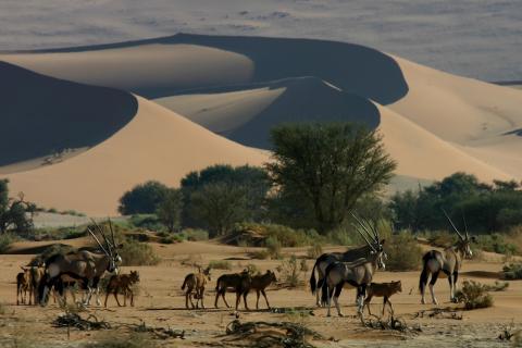 Namib Wüste Sossusvlei aus der Luft