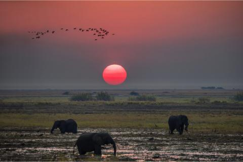 Chobe Fluss Sundowner mit Elefanten beim Sonnenuntergang
