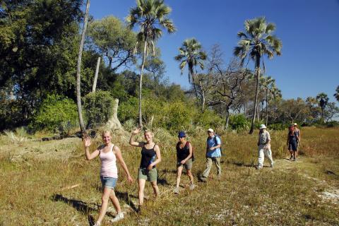 Bushwalk Walking Safari Okavngo Delta Botswana