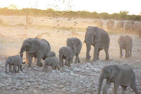 Elefanten bei Sunset im Etosha Nationalaprk