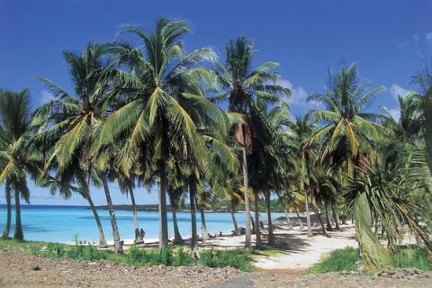 Traumstrand mit Palmen und feinem Sandin Inhambane / Mosambik