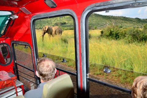 Südafrika Tour durch den Krüger Nationalpark: Dei Elefantenherde ist vom Safaritruck gut zu beobachten