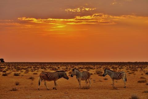 Namibia Kleingruppenreise: Sonnenuntergang mit Zebras im Etosha Nationalpark