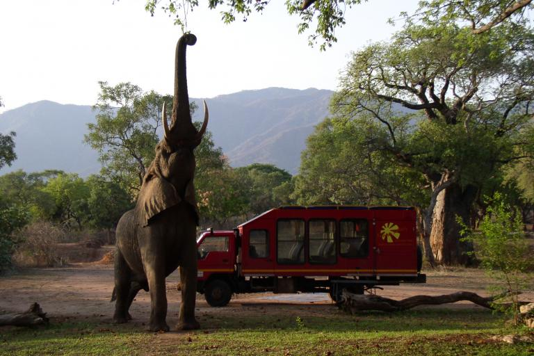 Sunways Safari Truck neben Elefanten auf einer Camping Safari durch das südliche Afrika