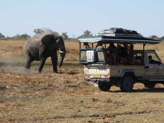 Elefant neben dem offenen Safarifahrzeug in Botswana