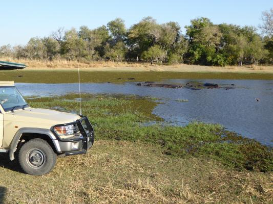 4x4 Safarifahrzeug in Botswana mit Flusspferden